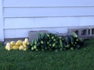 Squash, Zucchini and Cucumber. The church has harvested over 1 ton for the last 3 years