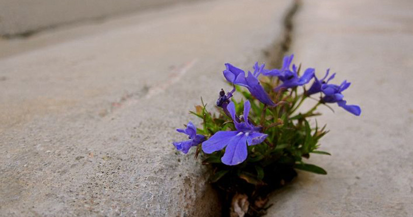 Flower in pavement 811 x 426